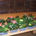 Green Academy - florists: events